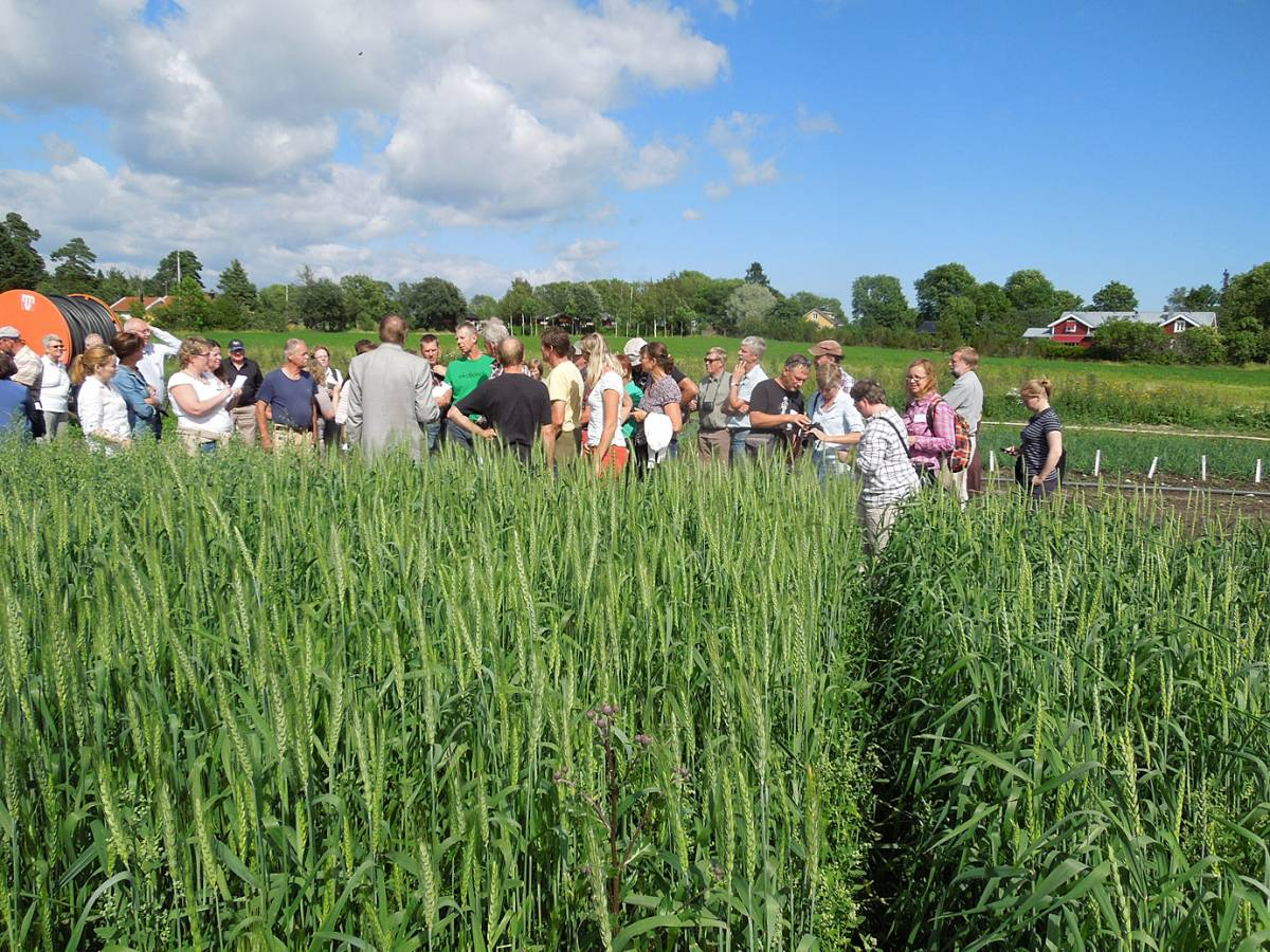 BBA > Nordic > visit Joomla research station heritage cereals trials - 1:19pm&nbsp;15<sup>th</sup>&nbsp;Jul.&nbsp;'14