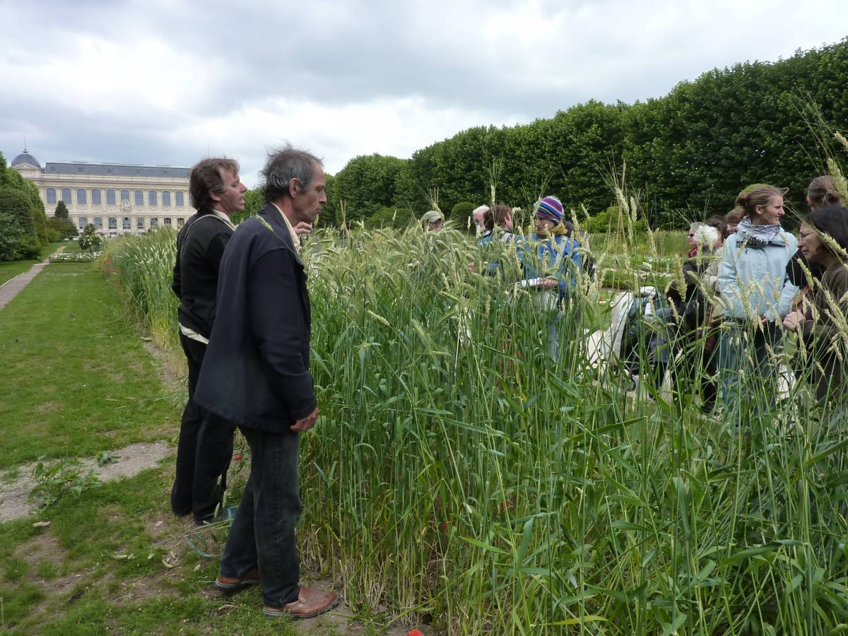 heritage wheat exhibition at the Jarden des Plantes, Paris - 9:43am&nbsp;19<sup>th</sup>&nbsp;Jun.&nbsp;'10