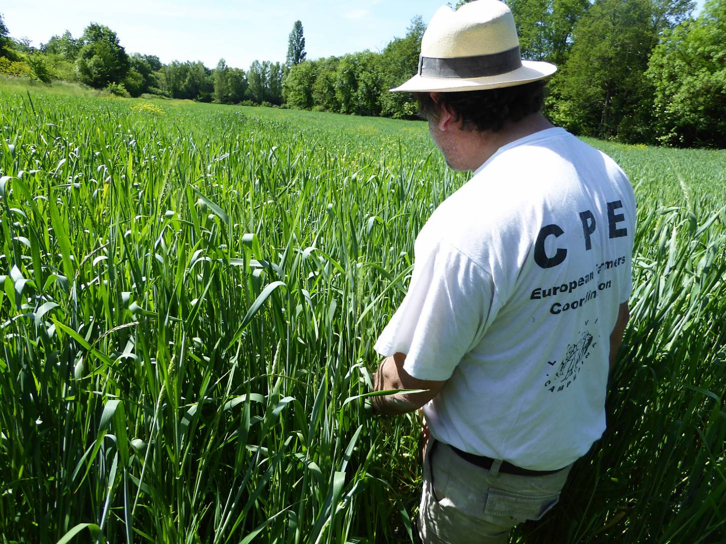 visiting heritage wheat farmer <a href='https://www.facebook.com/paysanbio.semencespaysannes' target='_blank'>Phillipe Guichard</a>, France, May '17 - 10:49am&nbsp;15<sup>th</sup>&nbsp;May.&nbsp;'17  <a href='http://maps.google.com/?t=h&q=44.478203,0.656358&z=18&output=embed' target=_blank><img src='http://www.brockwell-bake.org.uk/img/marker.png' style='border:none;vertical-align:top' height=16px></a>