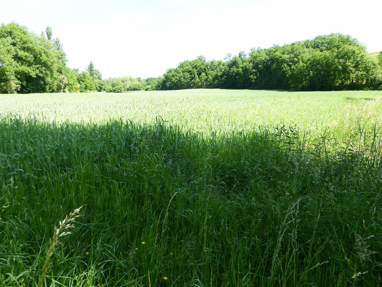 visiting heritage wheat farmer <a href='https://www.facebook.com/paysanbio.semencespaysannes' target='_blank'>Phillipe Guichard</a>, France, May '17 - 10:56am&nbsp;15<sup>th</sup>&nbsp;May.&nbsp;'17  <a href='http://maps.google.com/?t=h&q=44.478347,0.656506&z=18&output=embed' target=_blank><img src='http://www.brockwell-bake.org.uk/img/marker.png' style='border:none;vertical-align:top' height=16px></a>