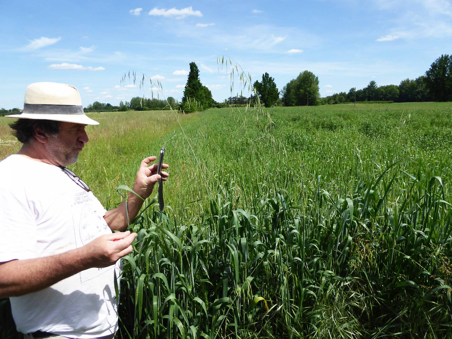 visiting heritage wheat farmer <a href='https://www.facebook.com/paysanbio.semencespaysannes' target='_blank'>Phillipe Guichard</a>, France, May '17 - 2:44pm&nbsp;15<sup>th</sup>&nbsp;May.&nbsp;'17  <a href='http://maps.google.com/?t=h&q=44.419700,0.607464&z=18&output=embed' target=_blank><img src='http://www.brockwell-bake.org.uk/img/marker.png' style='border:none;vertical-align:top' height=16px></a>