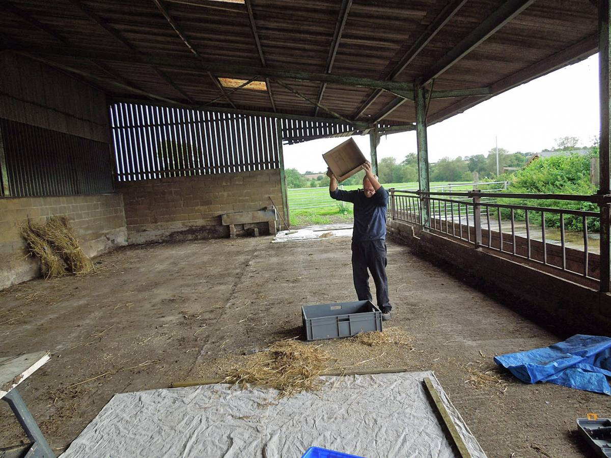 bit of manual winnowing - Westmill Farm, Oxon - 3:49pm&nbsp;25<sup>th</sup>&nbsp;Aug.&nbsp;'12