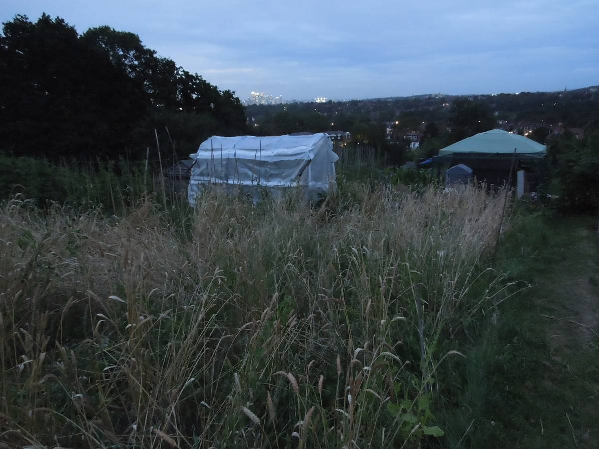 Rosendale allotments - 9:04pm&nbsp;6<sup>th</sup>&nbsp;Aug.&nbsp;'12