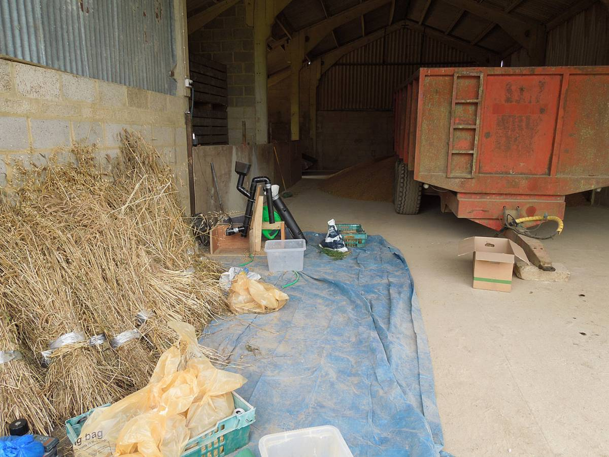 sheaves ready for processing - Perry Court - session 2 - 2:27pm&nbsp;21<sup>st</sup>&nbsp;Aug.&nbsp;'12