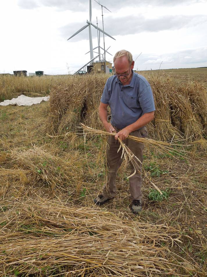 Stephen showing two strand sheaf method - Westmill Farm, Oxon - 5:03pm&nbsp;23<sup>rd</sup>&nbsp;Aug.&nbsp;'12