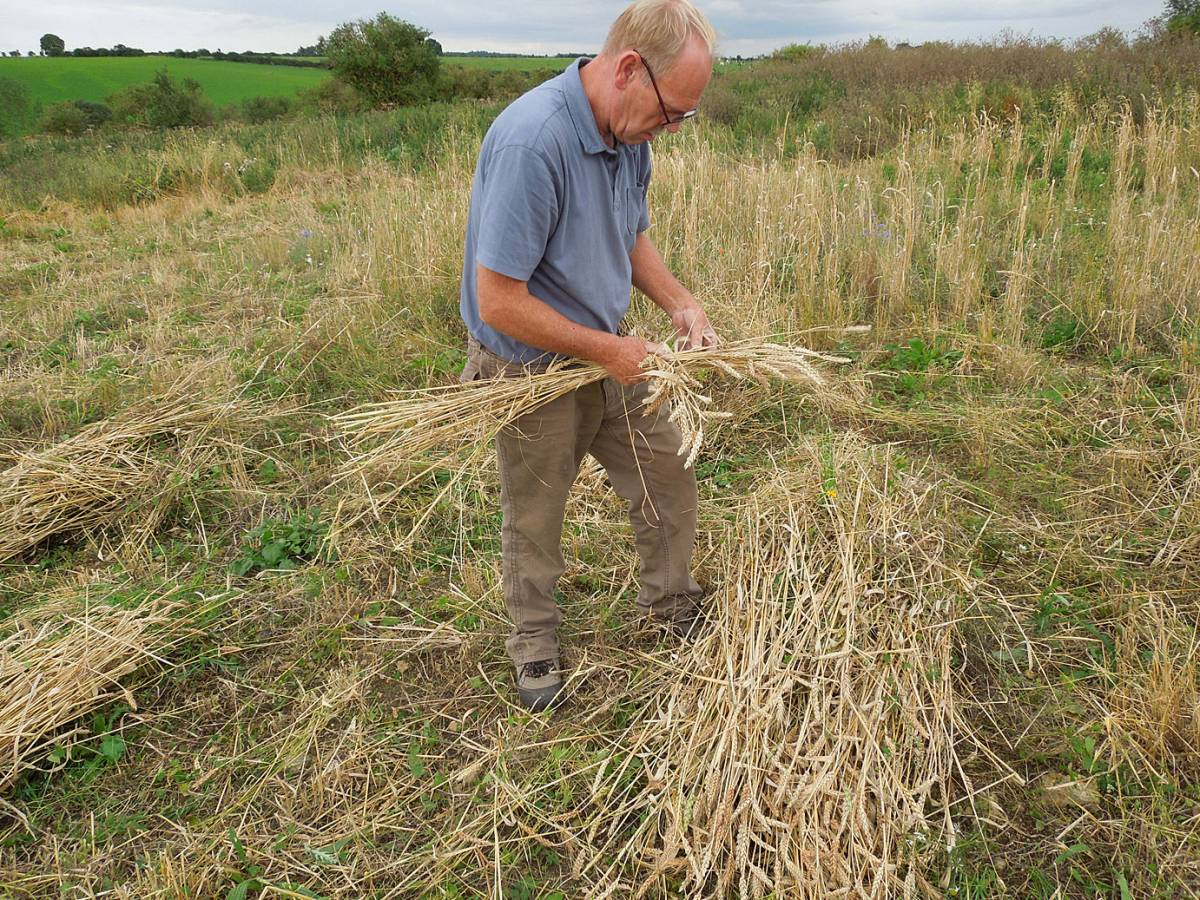 Stephen showing two strand sheaf method - Westmill Farm, Oxon - 5:58pm&nbsp;23<sup>rd</sup>&nbsp;Aug.&nbsp;'12