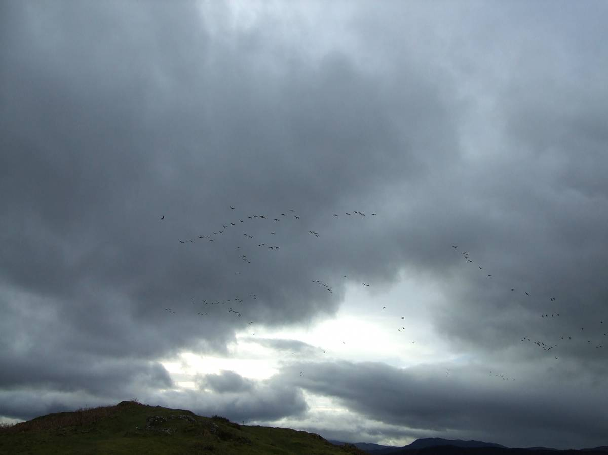 LLD forum 2012, Strathpeffer, geese on the move - 4:55pm&nbsp;11<sup>th</sup>&nbsp;Mar.&nbsp;'12