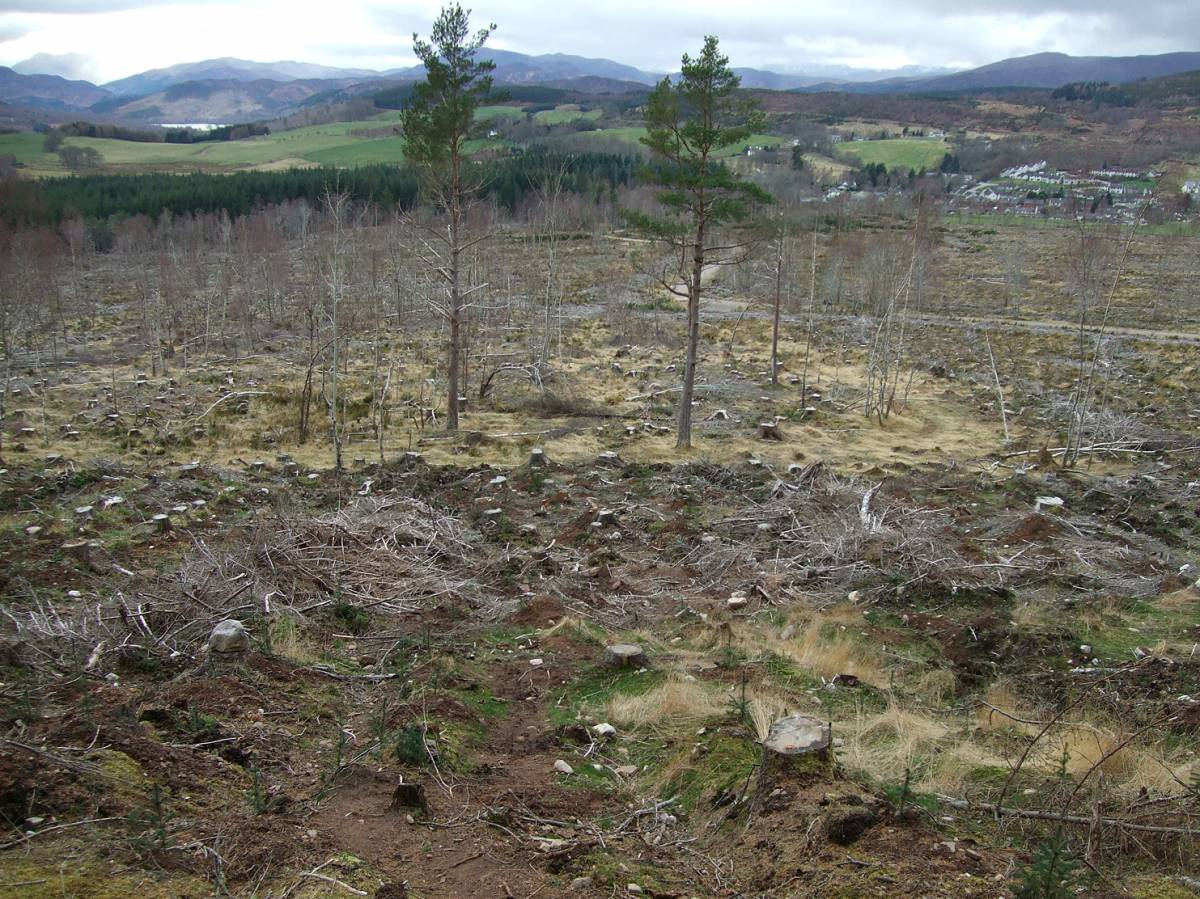LLD forum 2012, Strathpeffer, somewhat ironic Forestry Commission mono culture destruction around the village - 6:19pm&nbsp;11<sup>th</sup>&nbsp;Mar.&nbsp;'12