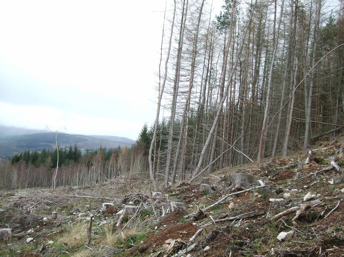 LLD forum 2012, Strathpeffer, somewhat ironic Forestry Commission mono culture destruction around the village - 6:20pm&nbsp;11<sup>th</sup>&nbsp;Mar.&nbsp;'12