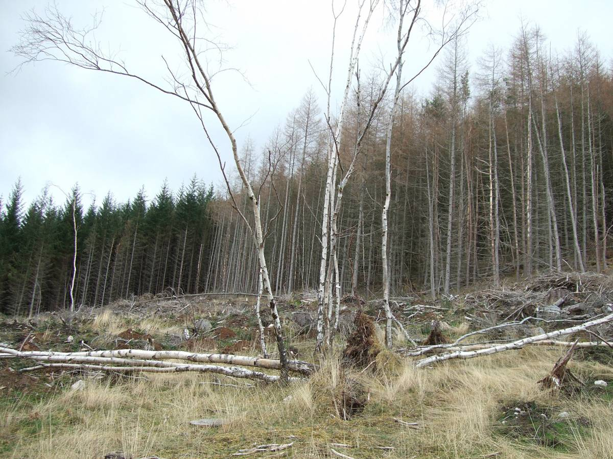 LLD forum 2012, Strathpeffer, somewhat ironic Forestry Commission mono culture destruction around the village - 6:21pm&nbsp;11<sup>th</sup>&nbsp;Mar.&nbsp;'12