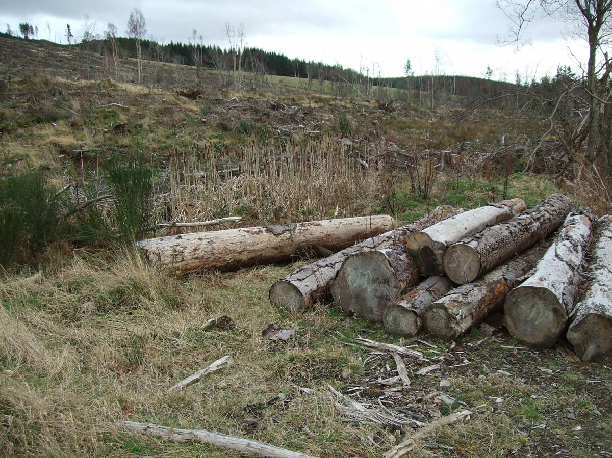 LLD forum 2012, Strathpeffer, somewhat ironic Forestry Commission mono culture destruction around the village - 6:30pm&nbsp;11<sup>th</sup>&nbsp;Mar.&nbsp;'12