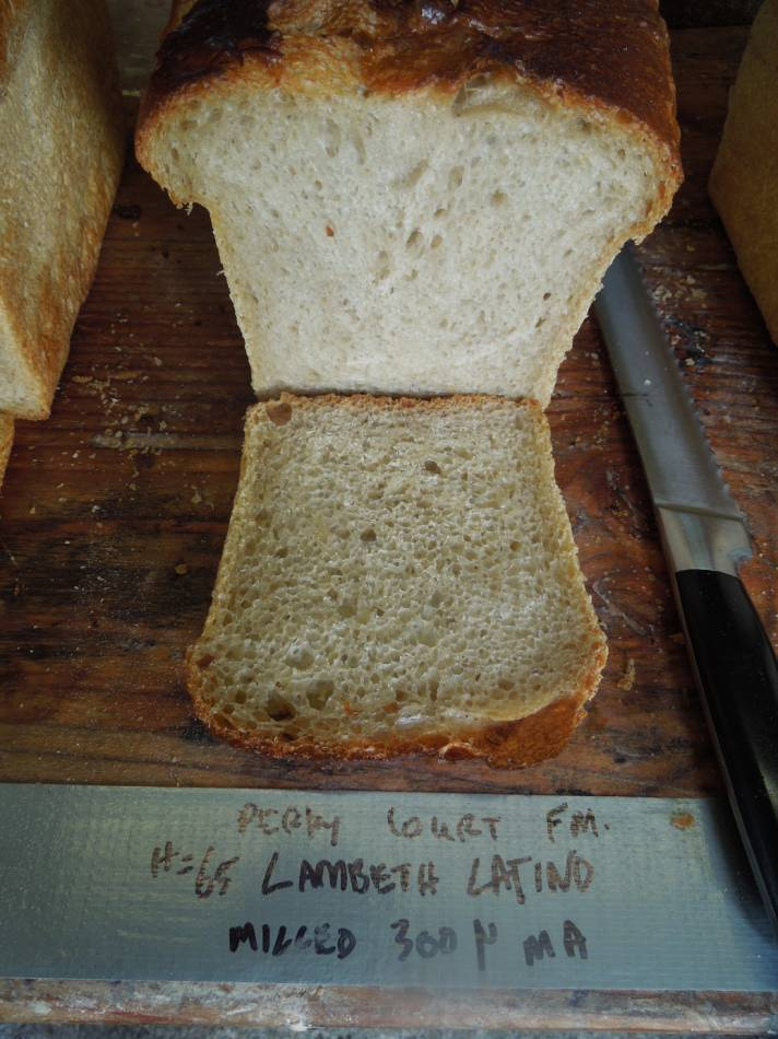 Lambeth Latino milled on E. Tyrol mill, Sheepsdrove Farm, 63% hydration - 11:27am&nbsp;22<sup>nd</sup>&nbsp;Sep.&nbsp;'14