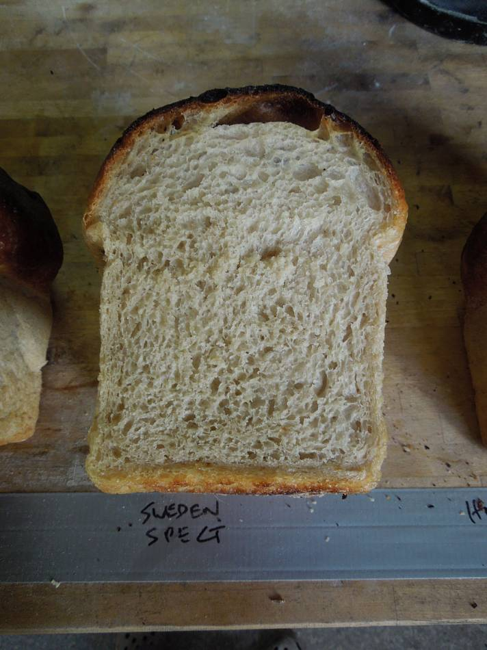 a very white Swedish spelt flour baking test - 8:53am&nbsp;4<sup>th</sup>&nbsp;Oct.&nbsp;'14