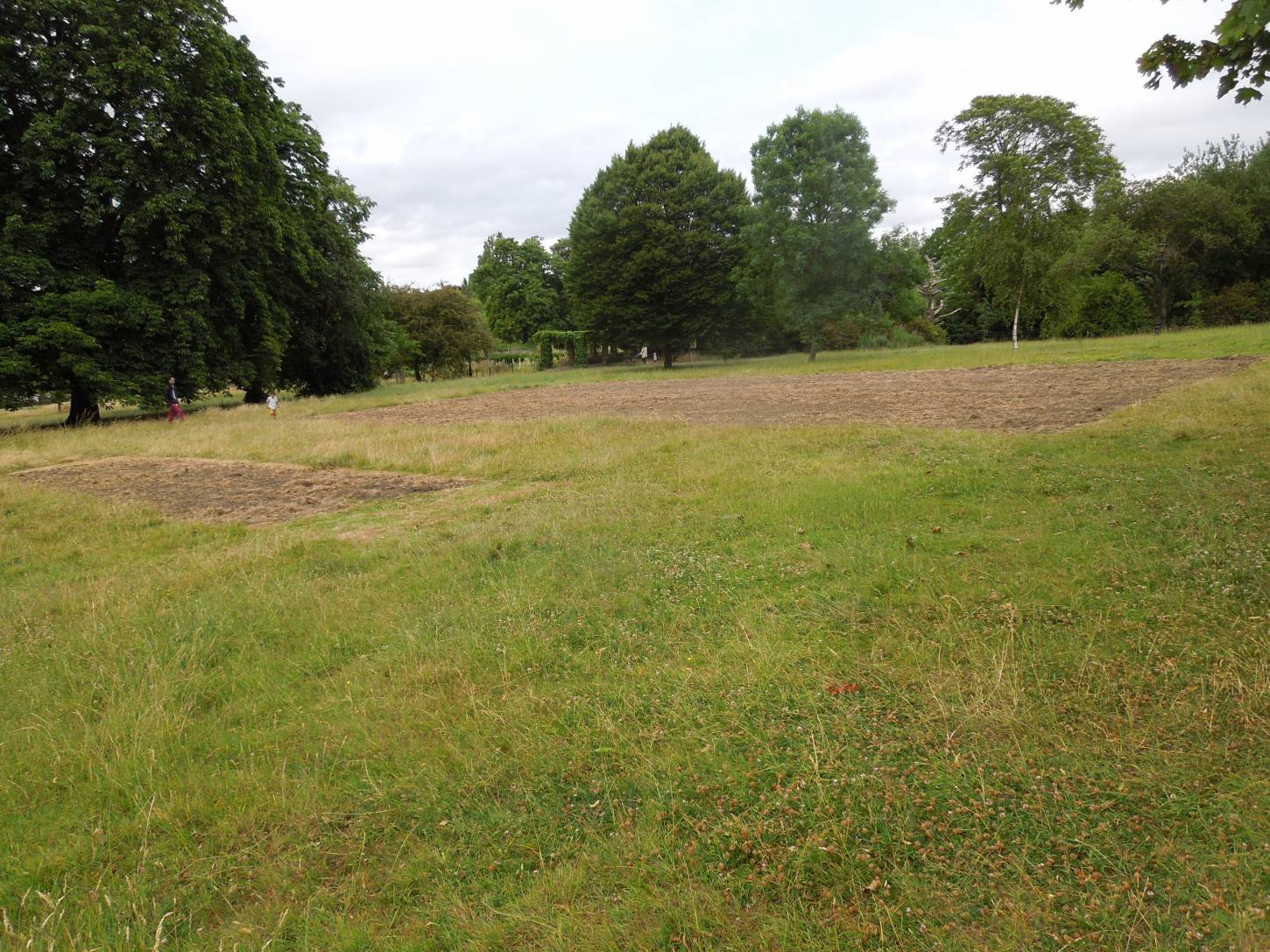 Ruskin Park wheat site rotvated - 4:57pm&nbsp;12<sup>th</sup>&nbsp;Jul.&nbsp;'15