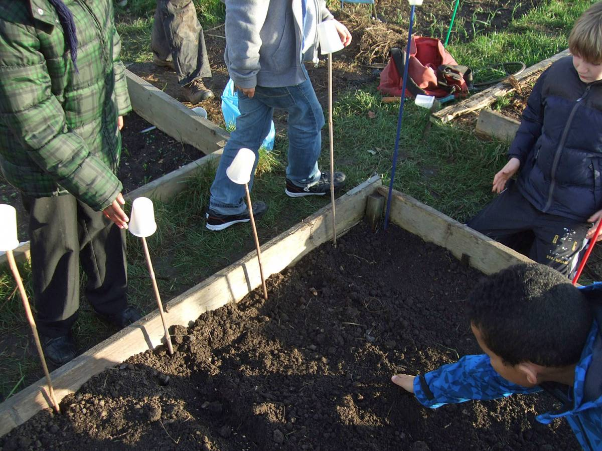 sowing with Rosendale Primary School - 4:02pm&nbsp;27<sup>th</sup>&nbsp;Jan.&nbsp;'12