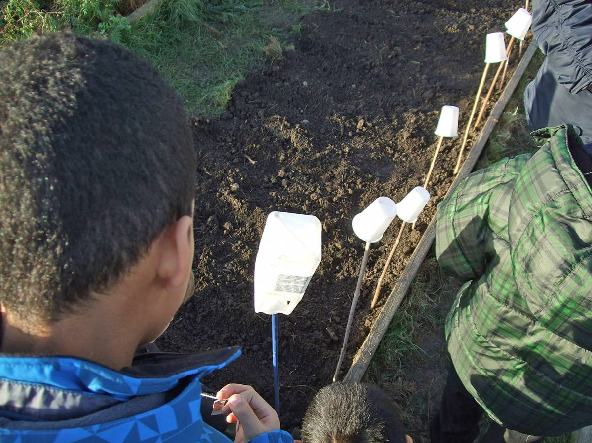 sowing with Rosendale Primary School - 4:04pm&nbsp;27<sup>th</sup>&nbsp;Jan.&nbsp;'12