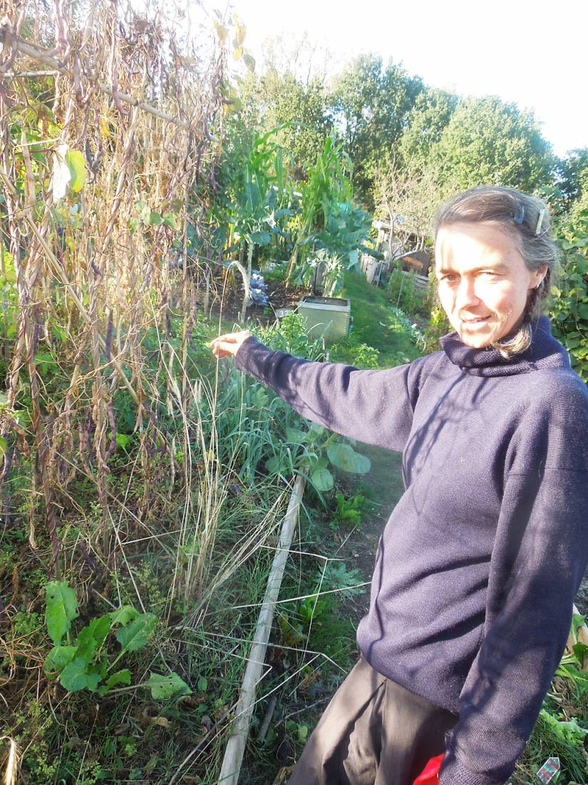 Visit of crew of Nordic seed epic voyager <a href='http://futurefarmers.com/seedjourney/' target='_blank'>RS Christiana</a> on <a href='http://www.rosendale-allotments.org.uk/' target='_blank'>RRA</a> allotment - Amy checks our rather pathetic svedjerug from 2015 - 4:56pm&nbsp;2<sup>nd</sup>&nbsp;Oct.&nbsp;'16