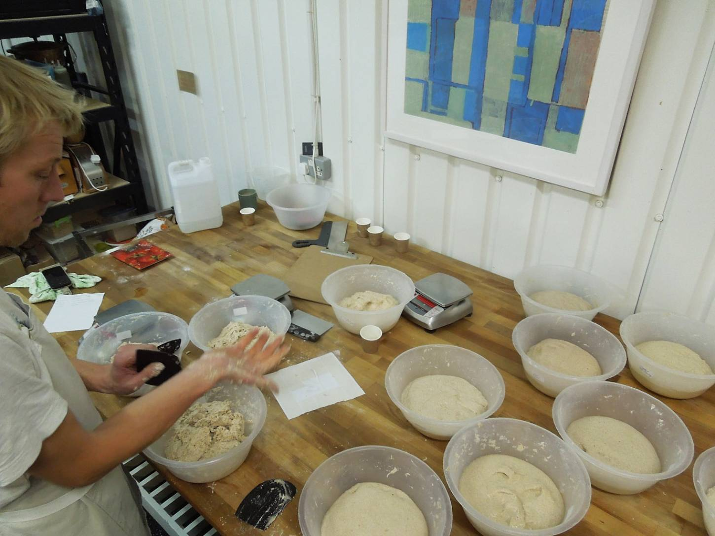baking trials of our heritage wheats at <a href='http://e5bakehouse.com/' target='_blank'>E5 bakehouse</a> - 7:40pm&nbsp;6<sup>th</sup>&nbsp;Dec.&nbsp;'16