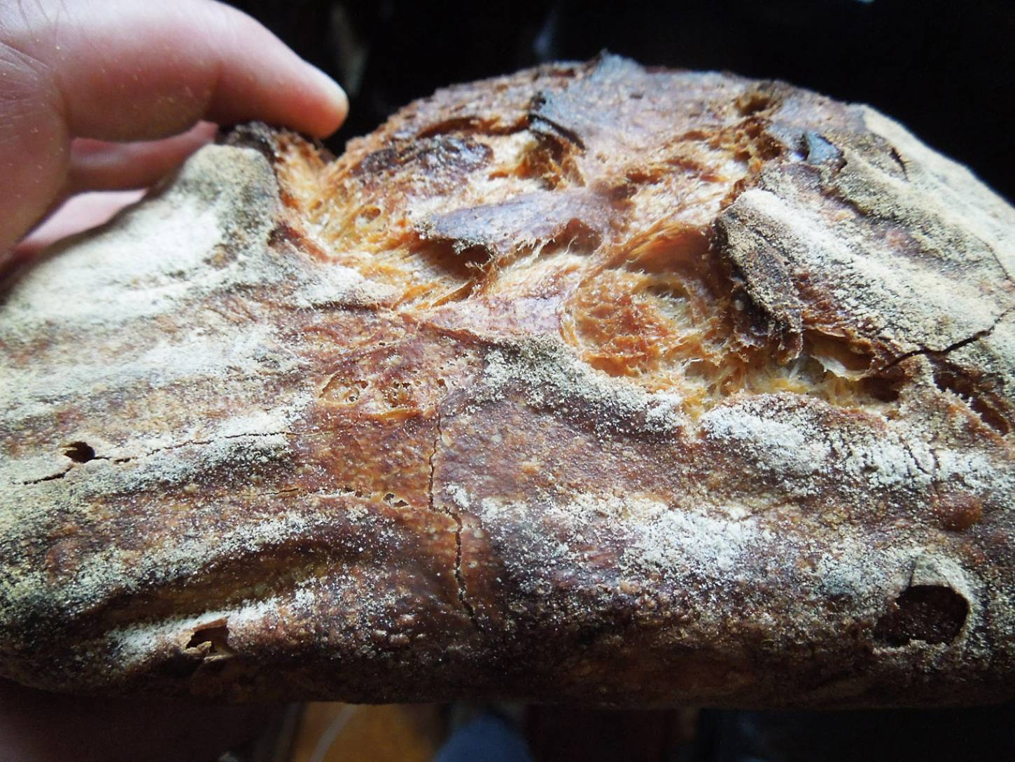 <a href='http://lbpedlar.com/' target='_blank'>LBP</a> white sourdough - 3:51pm&nbsp;14<sup>th</sup>&nbsp;Dec.&nbsp;'16