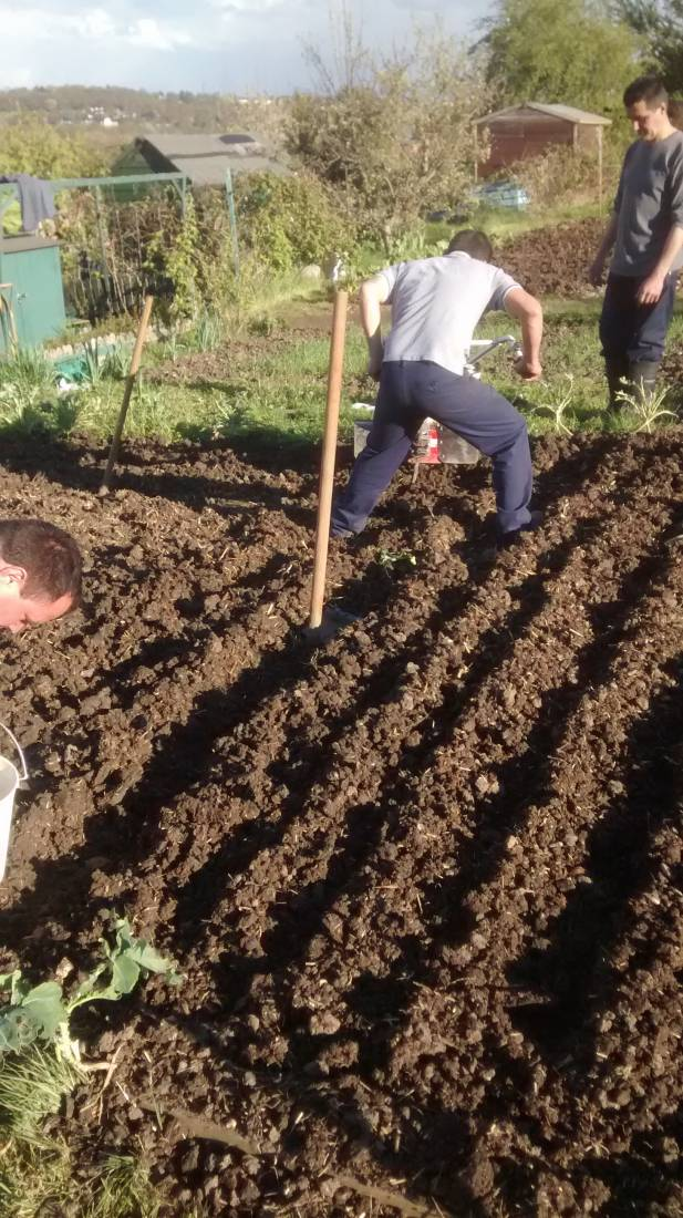 potato planting, Madeiran style, London '16 - 6:03pm&nbsp;30<sup>th</sup>&nbsp;Apr.&nbsp;'16  <a href='http://maps.google.com/?t=h&q=51.444202,-0.100905&z=15' target=_blank><img src='http://www.brockwell-bake.org.uk/img/marker.png' style='border:none;vertical-align:top' height=16px></a>