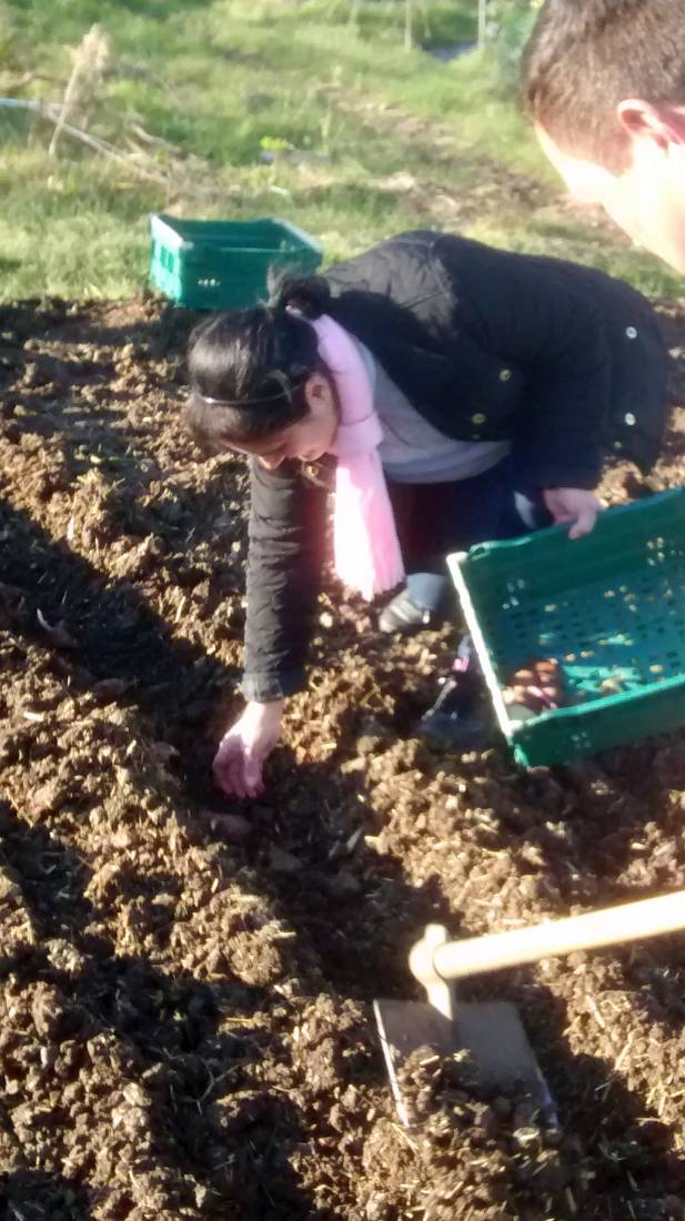 potato planting, Madeiran style, London '16 - 6:23pm&nbsp;30<sup>th</sup>&nbsp;Apr.&nbsp;'16  <a href='http://maps.google.com/?t=h&q=51.444183,-0.100971&z=15' target=_blank><img src='http://www.brockwell-bake.org.uk/img/marker.png' style='border:none;vertical-align:top' height=16px></a>