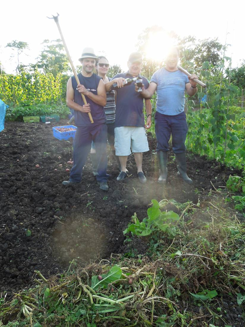 potato harvest '16 plot 36 - 7:24pm&nbsp;6<sup>th</sup>&nbsp;Aug.&nbsp;'16