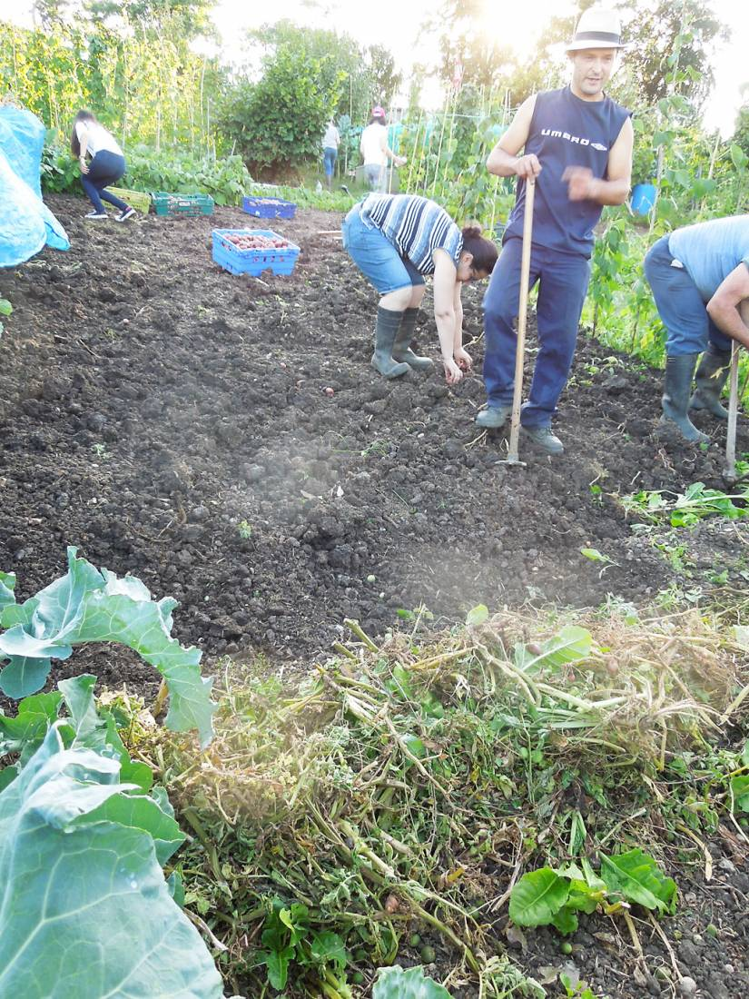 potato harvest '16 plot 36 - 7:26pm&nbsp;6<sup>th</sup>&nbsp;Aug.&nbsp;'16