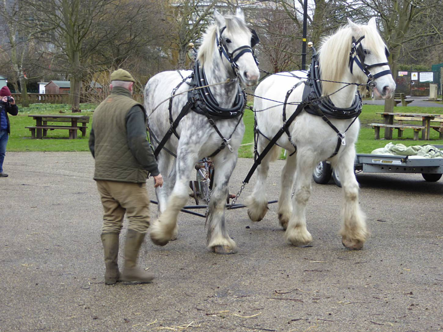 Shire horses, Heath and Nobby with ploughman Tom Nixon from <a href='http://www.operationcentaur.com/' target='_blank'>Operation Centaur</a> come to plough the <a href='https://twitter.com/ruskinparkse5?lang=en' target='_blank'>Ruskin Park</a> wheat patch - 12:48pm&nbsp;9<sup>th</sup>&nbsp;Feb.&nbsp;'18  <a href='http://maps.google.com/?t=h&q=51.465808,-0.092842&z=18&output=embed' target=_blank><img src='http://www.brockwell-bake.org.uk/img/marker.png' style='border:none;vertical-align:top' height=16px></a>