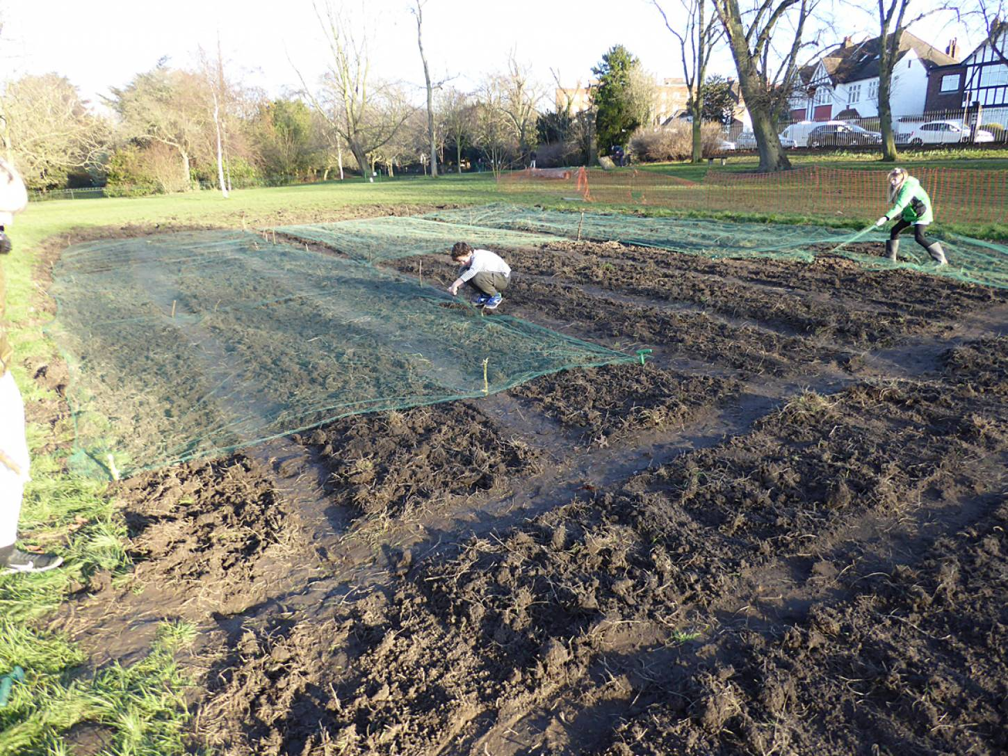 wheat goes in after harrowing on <a href='https://www.friendsofruskinpark.org.uk/' target='_blank'>Ruskin Park</a> - 4:49pm&nbsp;17<sup>th</sup>&nbsp;Feb.&nbsp;'18