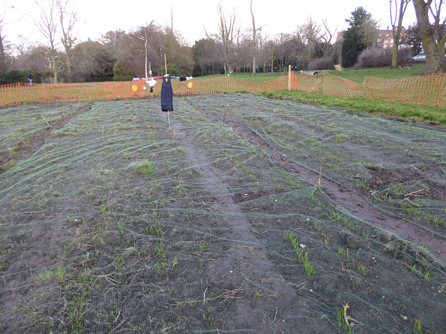 winter wheat up nicely with lovely scarey scare crows from local school - 5:33pm&nbsp;16<sup>th</sup>&nbsp;Mar.&nbsp;'18  <a href='http://maps.google.com/?t=h&q=51.464969,-0.092317&z=18&output=embed' target=_blank><img src='http://www.brockwell-bake.org.uk/img/marker.png' style='border:none;vertical-align:top' height=16px></a>