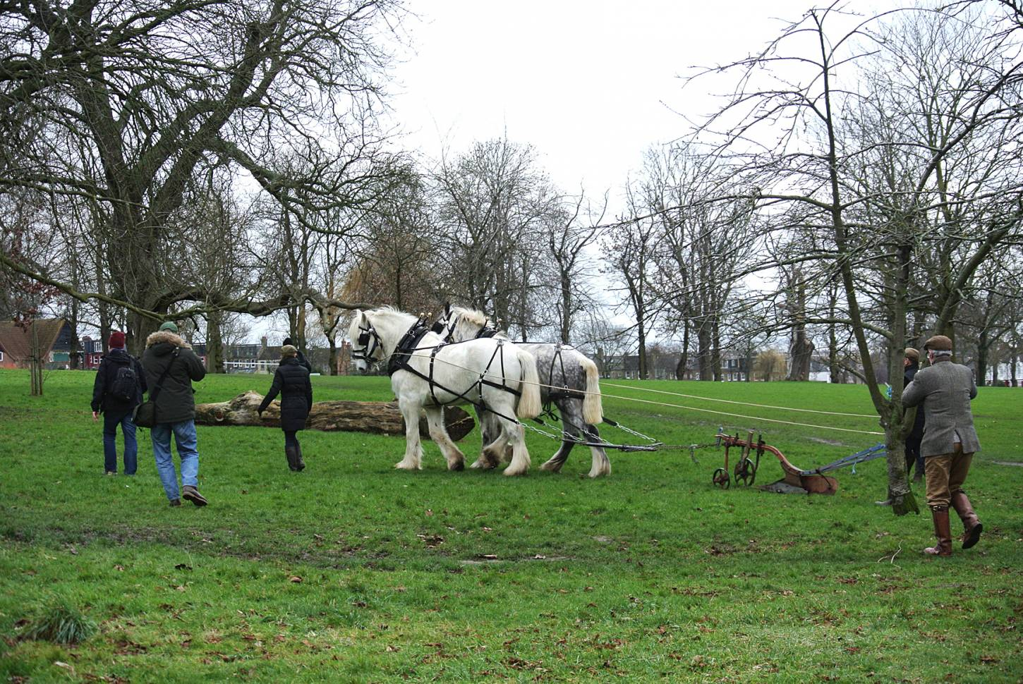 Shire horses, Heath and Nobby with ploughman Tom Nixon from <a href='http://www.operationcentaur.com/' target='_blank'>Operation Centaur</a> come to plough the <a href='https://twitter.com/ruskinparkse5?lang=en' target='_blank'>Ruskin Park</a> wheat patch. Image: Marie Cullen - 12:08pm&nbsp;9<sup>th</sup>&nbsp;Feb.&nbsp;'18