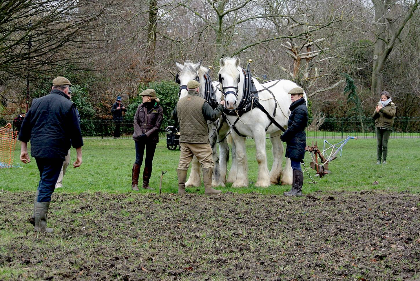 Shire horses, Heath and Nobby with ploughman Tom Nixon from <a href='http://www.operationcentaur.com/' target='_blank'>Operation Centaur</a> come to plough the <a href='https://twitter.com/ruskinparkse5?lang=en' target='_blank'>Ruskin Park</a> wheat patch. Image: Marie Cullen - 12:10pm&nbsp;9<sup>th</sup>&nbsp;Feb.&nbsp;'18