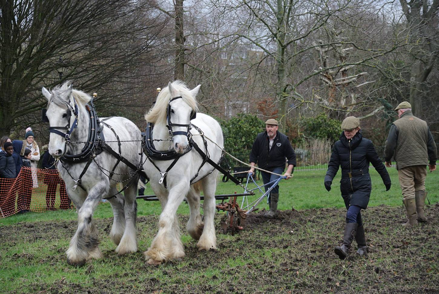 Shire horses, Heath and Nobby with ploughman Tom Nixon from <a href='http://www.operationcentaur.com/' target='_blank'>Operation Centaur</a> come to plough the <a href='https://twitter.com/ruskinparkse5?lang=en' target='_blank'>Ruskin Park</a> wheat patch. Image: Marie Cullen - 12:13pm&nbsp;9<sup>th</sup>&nbsp;Feb.&nbsp;'18