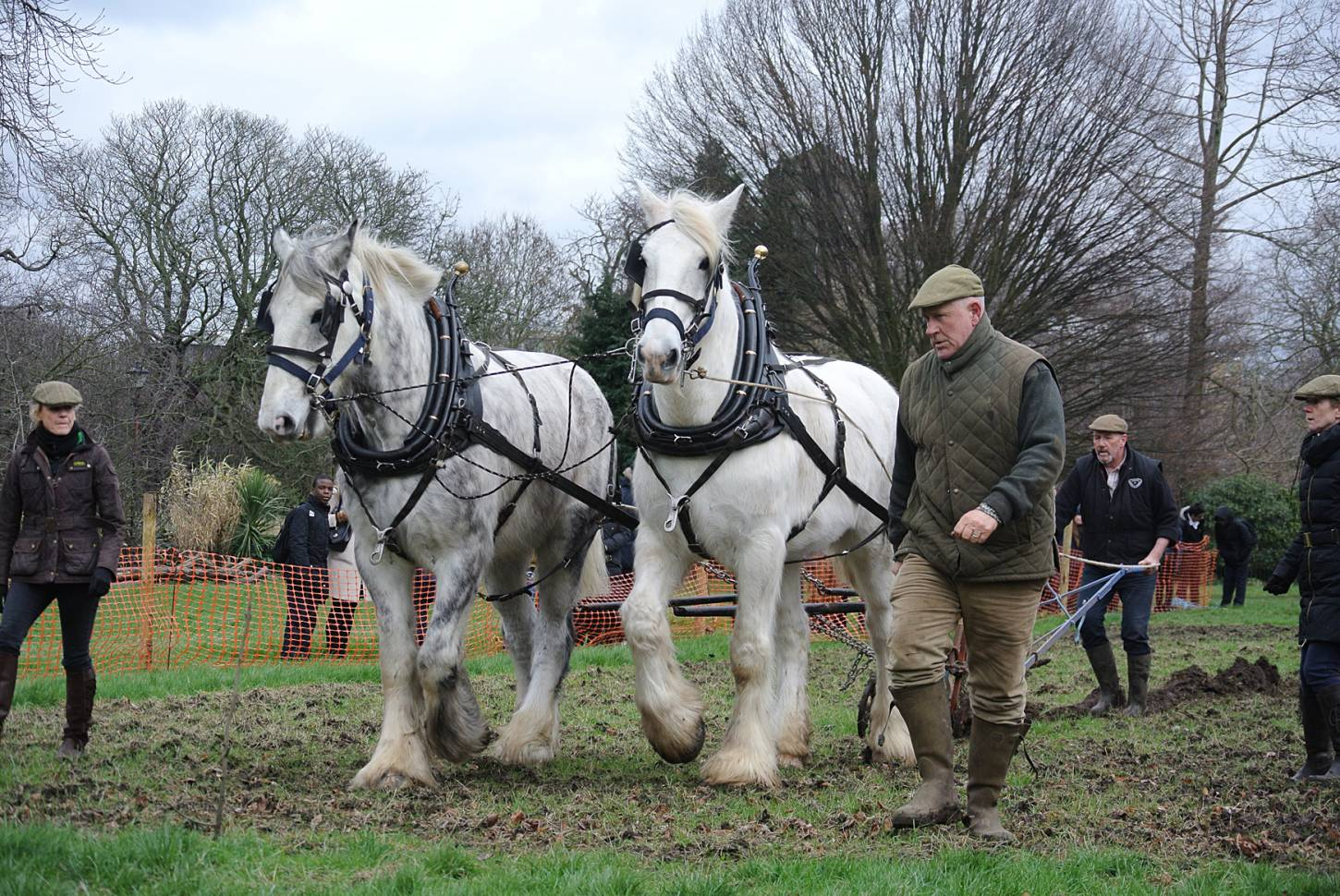 Shire horses, Heath and Nobby with ploughman Tom Nixon from <a href='http://www.operationcentaur.com/' target='_blank'>Operation Centaur</a> come to plough the <a href='https://twitter.com/ruskinparkse5?lang=en' target='_blank'>Ruskin Park</a> wheat patch. Image: Marie Cullen - 12:14pm&nbsp;9<sup>th</sup>&nbsp;Feb.&nbsp;'18