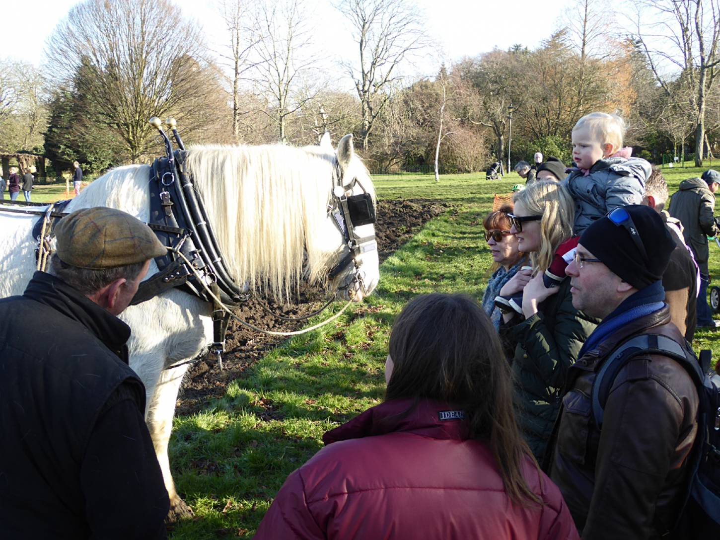 Shire horse Heath and ploughman Tom Nixon from <a href='http://www.operationcentaur.com/' target='_blank'>Operation Centaur</a> return to harrow our wheat patch on <a href='https://www.friendsofruskinpark.org.uk/' target='_blank'>Ruskin Park</a> - 11:42am&nbsp;17<sup>th</sup>&nbsp;Feb.&nbsp;'18  <a href='http://maps.google.com/?t=h&q=51.464714,-0.092919&z=18&output=embed' target=_blank><img src='http://www.brockwell-bake.org.uk/img/marker.png' style='border:none;vertical-align:top' height=16px></a>