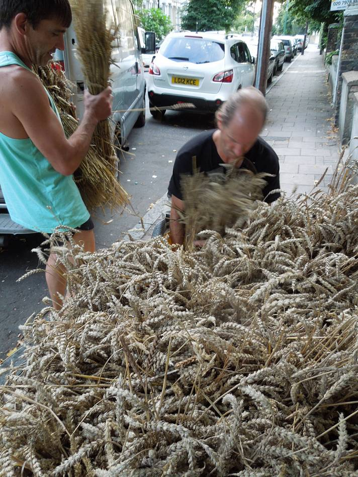 Brockwell Bake at SouthBanquet 13 - day 1 - wheat sheaves on departure - 6:20pm&nbsp;29<sup>th</sup>&nbsp;Aug.&nbsp;'13