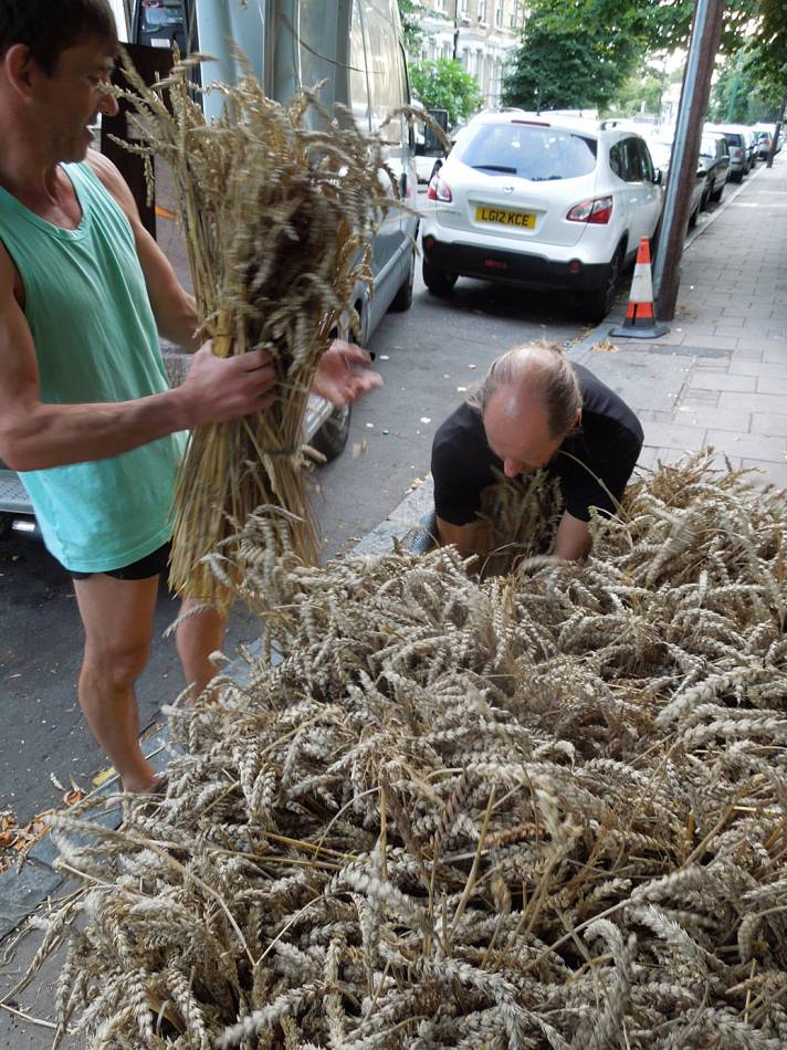 Brockwell Bake at SouthBanquet 13 - day 1 - wheat sheaves on departure with Darron and Andy - 6:21pm&nbsp;29<sup>th</sup>&nbsp;Aug.&nbsp;'13
