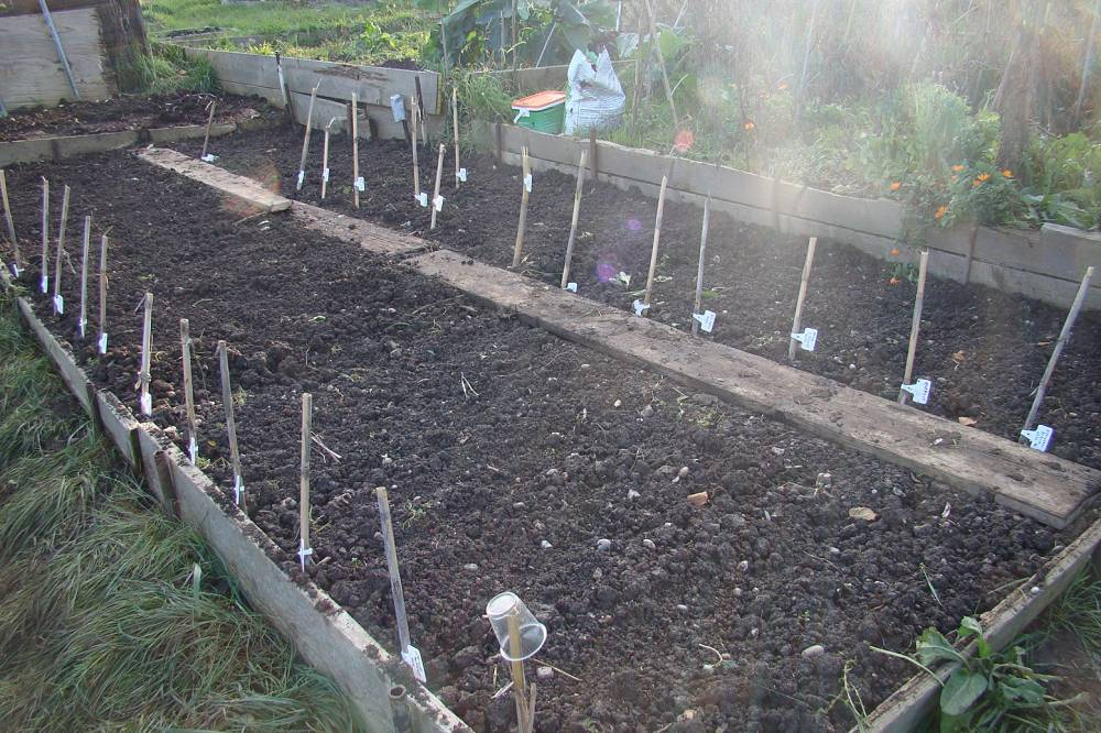 Plot 35, sowing 7/11/10