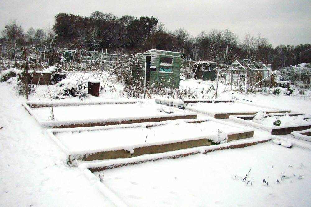 Allotments - 19/12/10