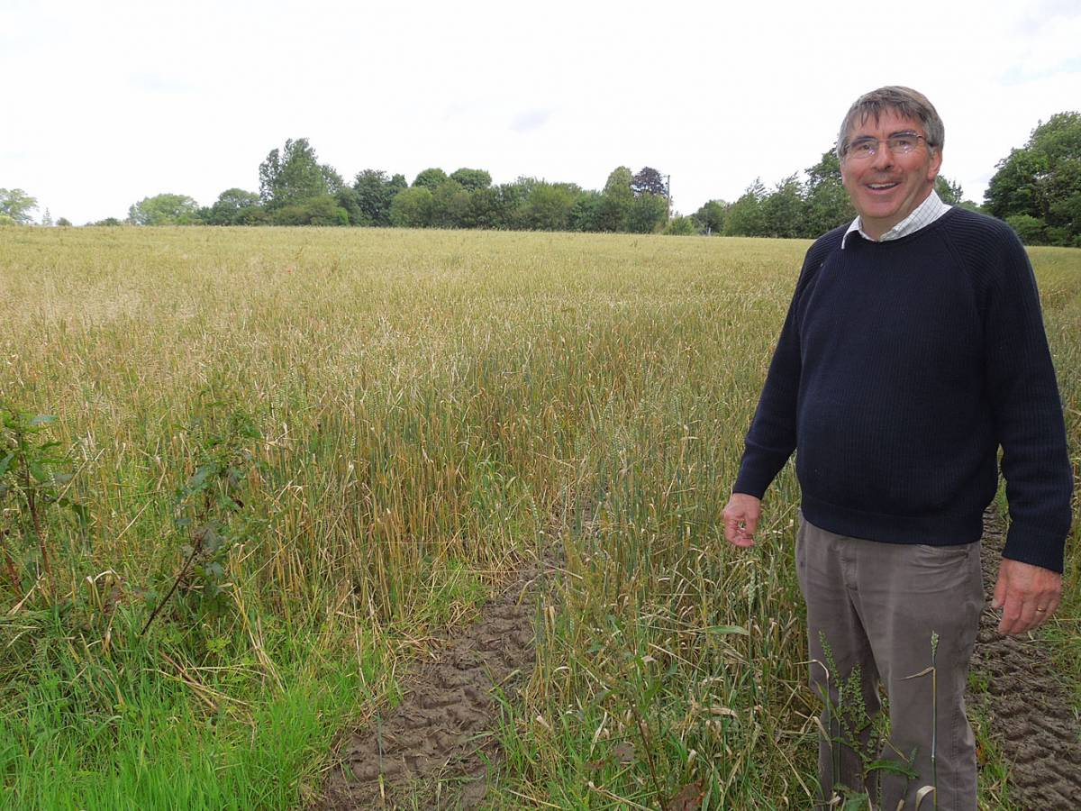 Howard Roberst in field of Magister wheat - visiting Hammonds End Farm, Harpenden - 10:54am&nbsp;17<sup>th</sup>&nbsp;Jul.&nbsp;'12