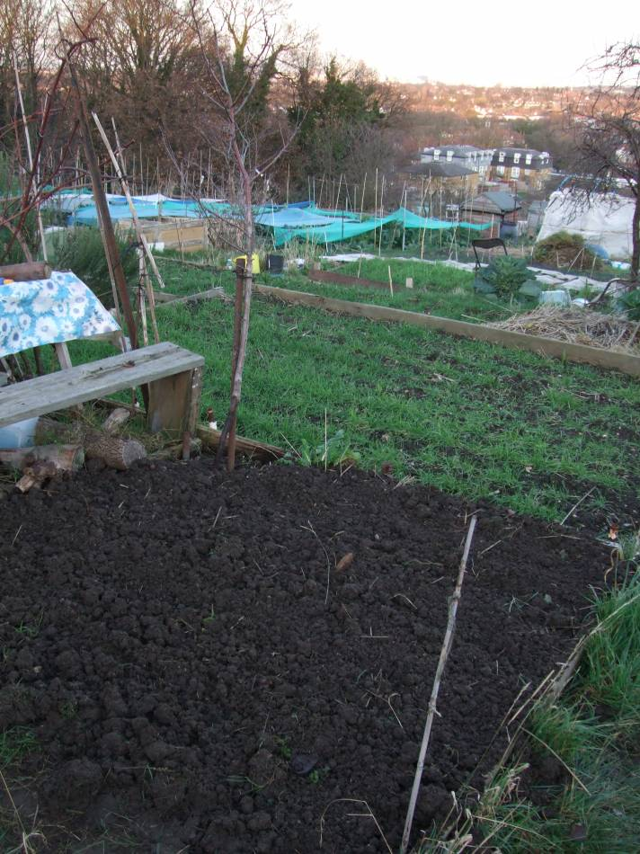 broad beans sown - 4:56pm&nbsp;2<sup>nd</sup>&nbsp;Jan.&nbsp;'12
