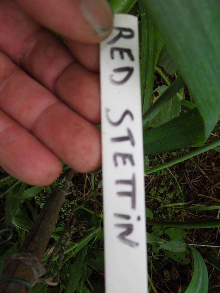 Red Stettin, plot 35 & 36 review, June 2012 - 5:42pm&nbsp;6<sup>th</sup>&nbsp;Jun.&nbsp;'12