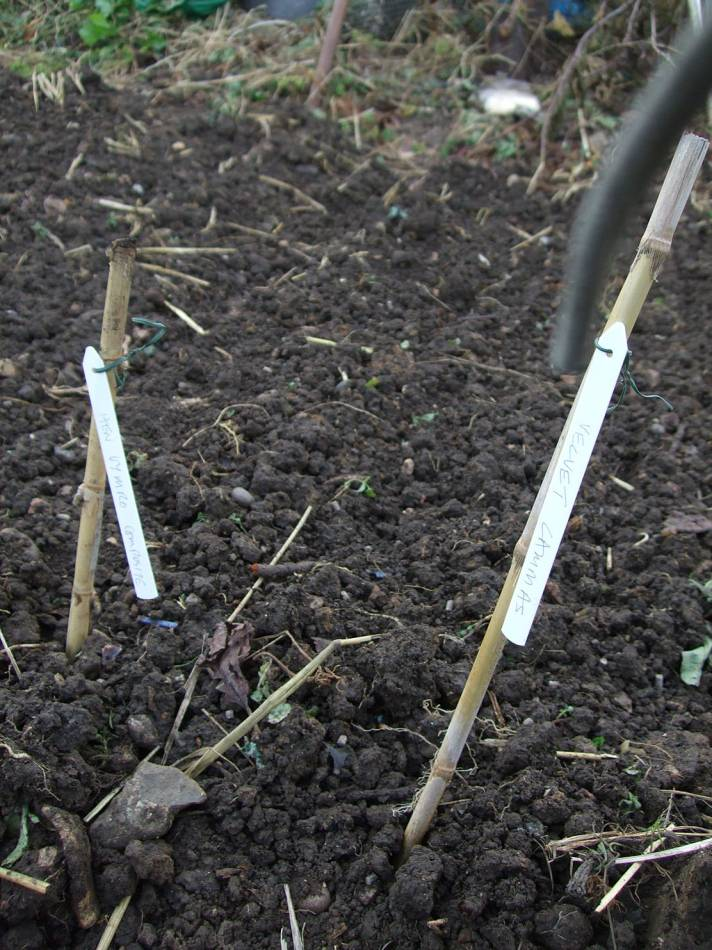 sowing on allotments 23/10/11